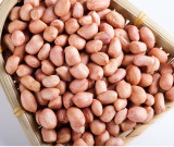 high quality non-gmo peanut for wholesale
