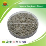high quality organic sunflower kernel